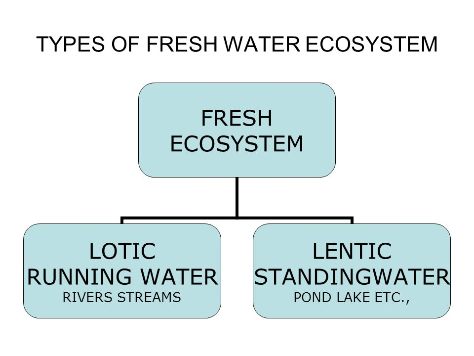 TYPES OF FRESH WATER ECOSYSTEM