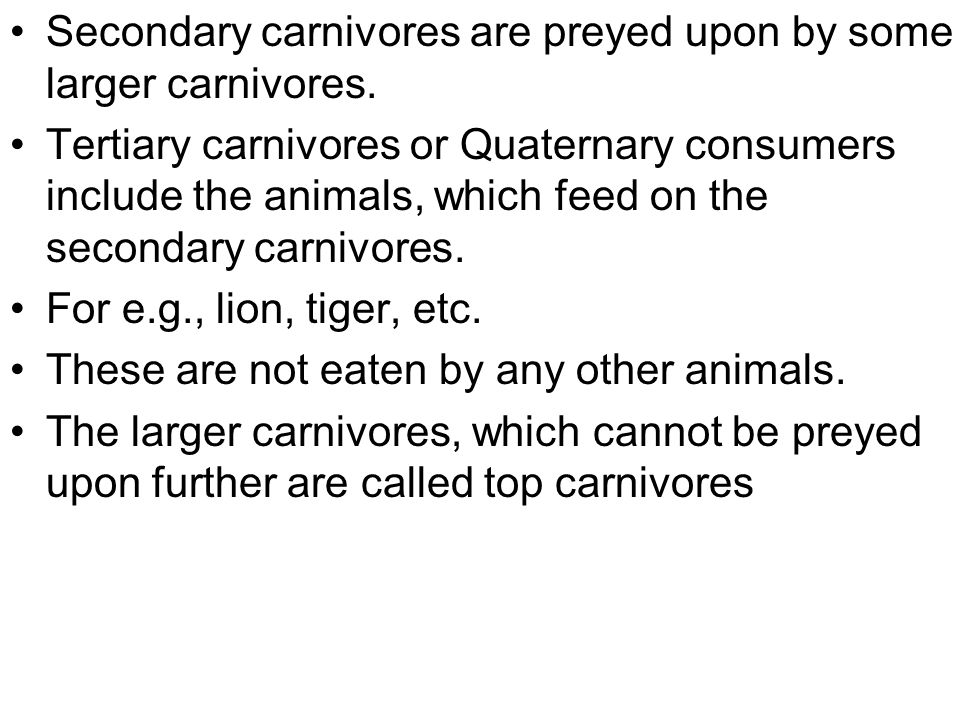 Secondary carnivores are preyed upon by some larger carnivores.