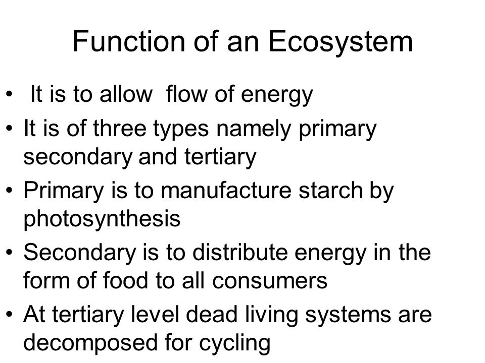 Function of an Ecosystem