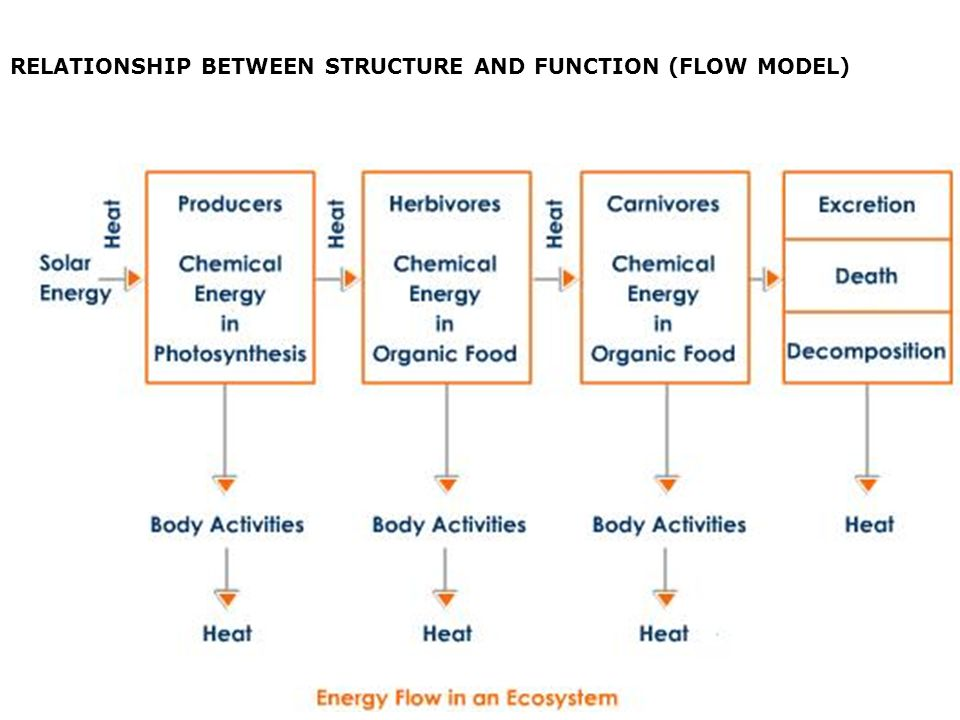 RELATIONSHIP BETWEEN STRUCTURE AND FUNCTION (FLOW MODEL)