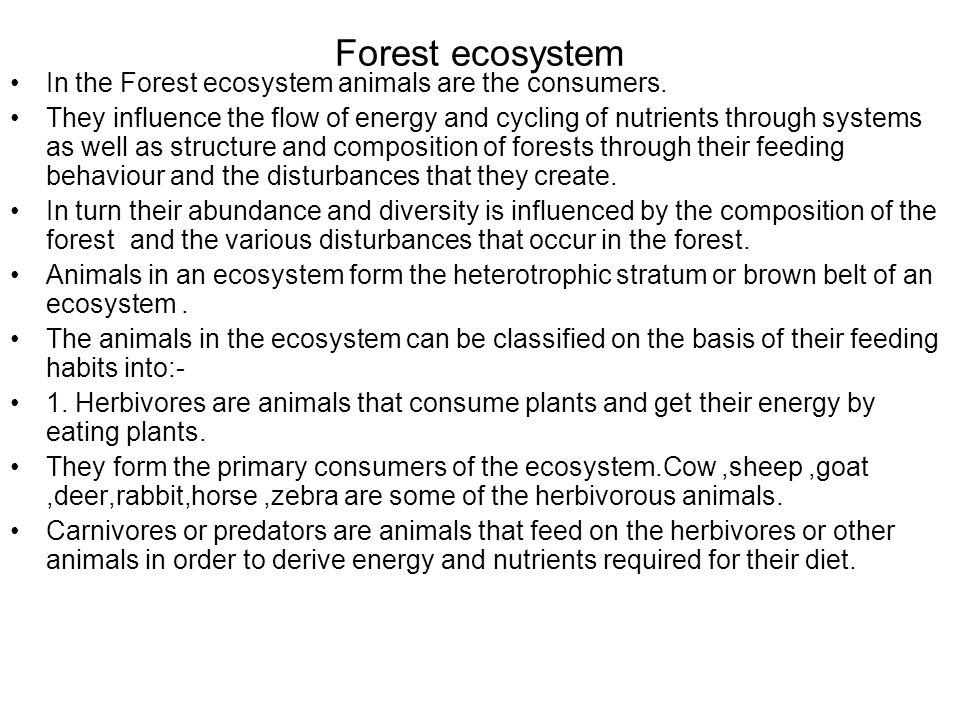 Forest ecosystem In the Forest ecosystem animals are the consumers.