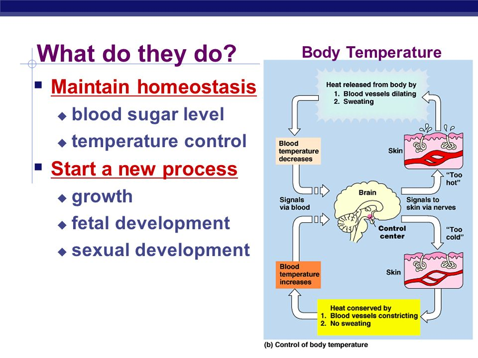 homeostasis of the human body maintaining temperature and blood pressure The body maintains homeostasis for many factors in addition to temperature for instance, the concentration of various ions in your blood must be homeostasis is maintained at many levels, not just the level of the whole body as it is for temperature for instance, the stomach maintains a ph.