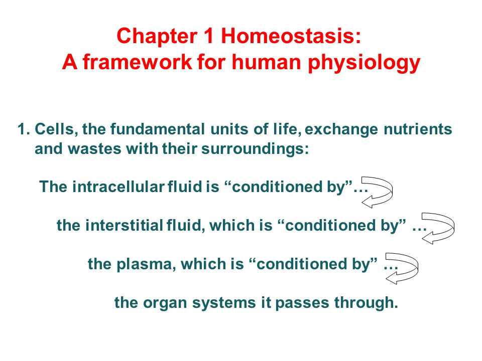 Vanders Human Physiology Ebook