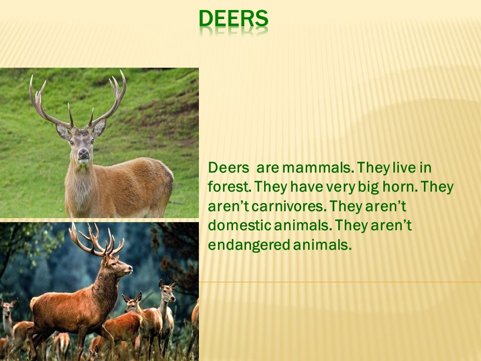WILD ANIMALS  - ppt video online download