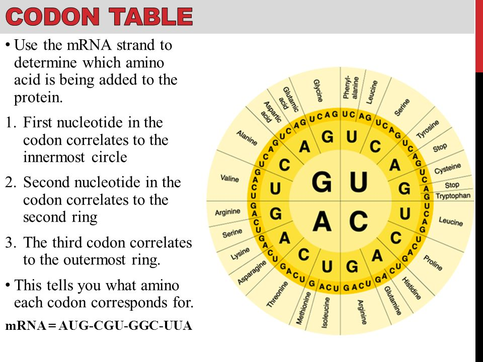 Protein Codon Table Part - 18: 19 Codon Table ...