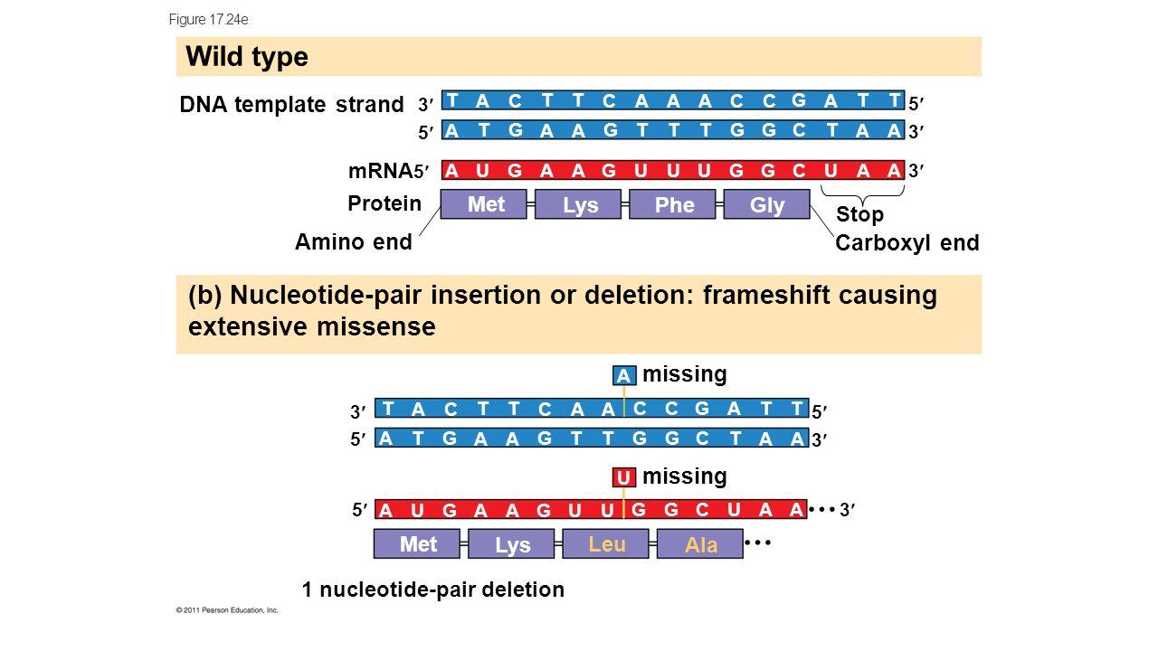 RNA – Transcription & Translation - ppt download