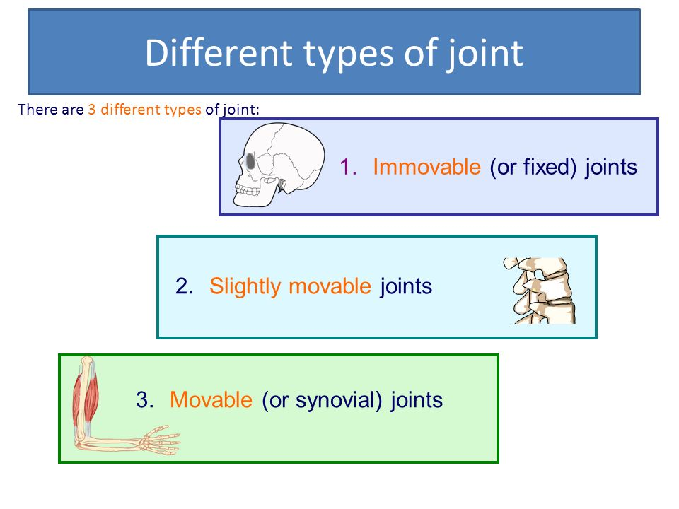 Joints And Their Classifications Ppt Download