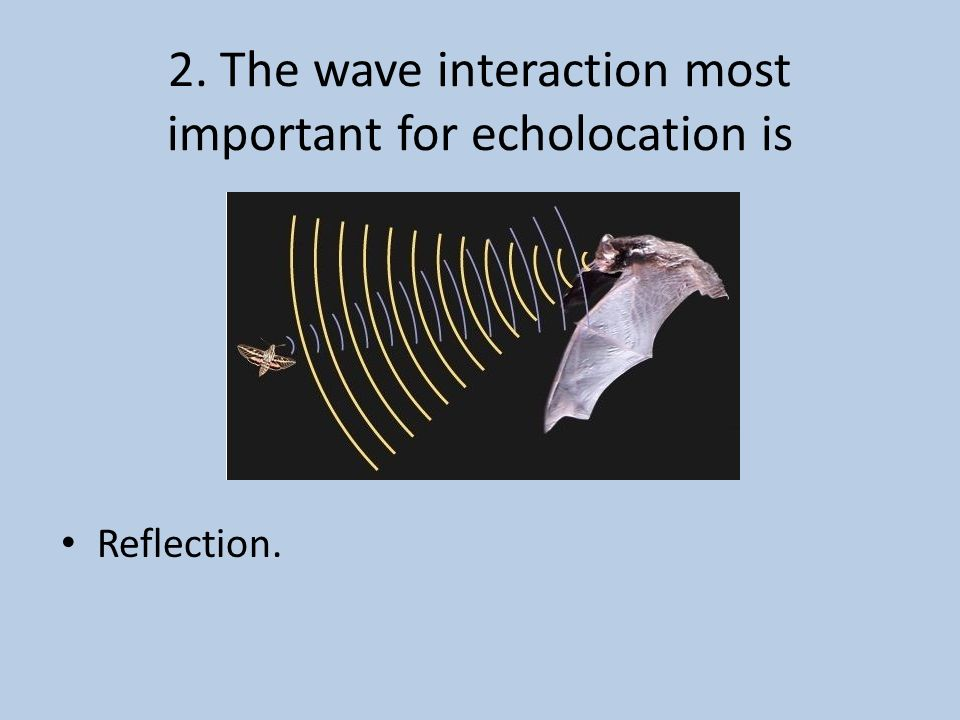 2. The wave interaction most important for echolocation is