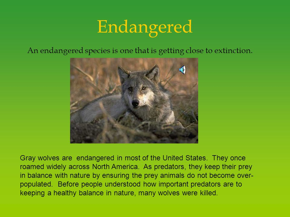 endangered species what is killing them Currently, more than 3,000 species of animals are considered endangered in the united states, the endangered species act was passed in 1973 to help with conservation efforts, but there are now three times as many endangered species as there were just ten years ago.