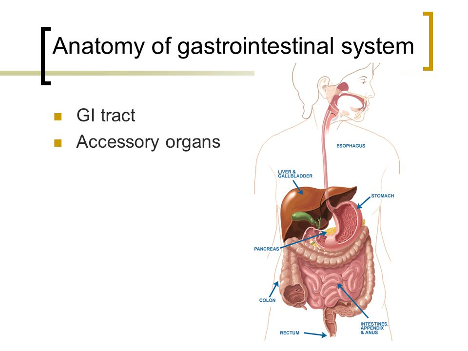 Nice Anatomy And Physiology Of Gi Tract Component - Human Anatomy ...
