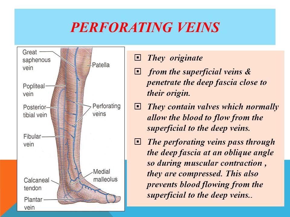 ARTERIES, VEINS OF Lower Limb - ppt video online download