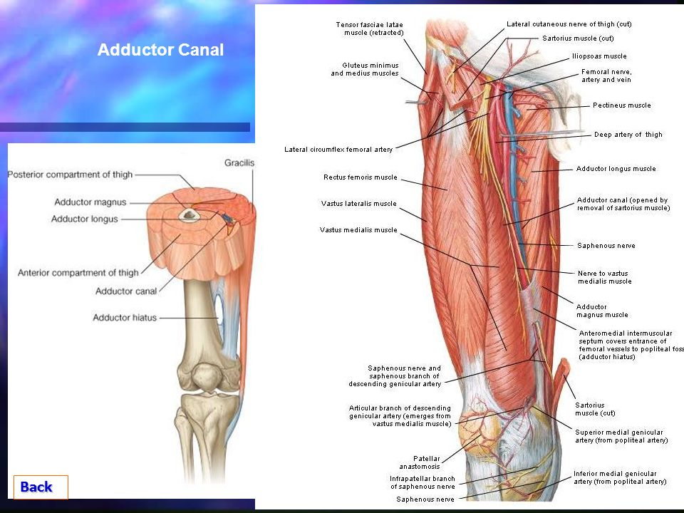Session Eight Anatomical Spaces Ppt Video Online Download