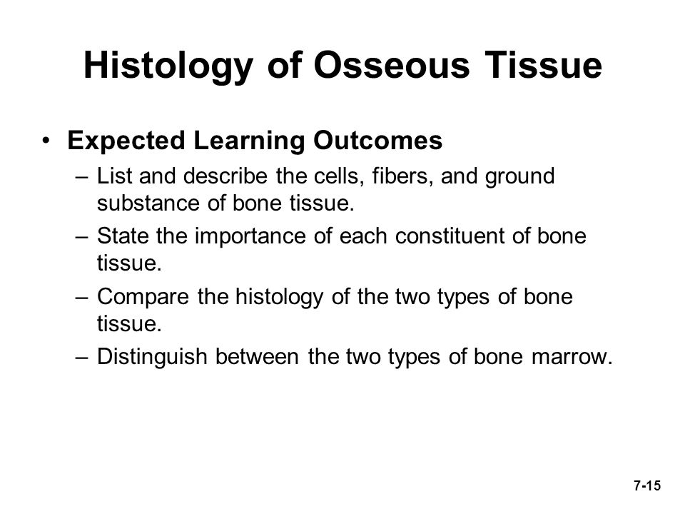 Chapter 7 *Lecture PowerPoint Bone Tissue - ppt download