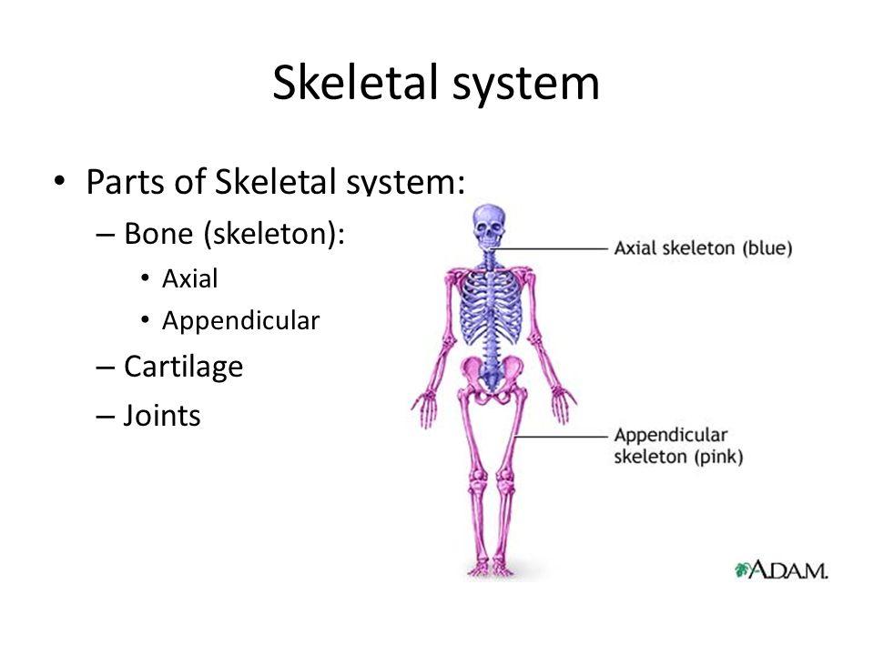 Skeletal system: BONE & CARTILAGE Bpharm semester I lecture 2 - ppt ...