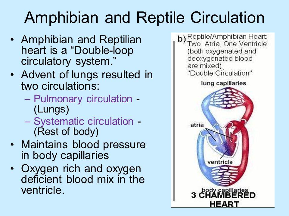 Comparative Circulator...