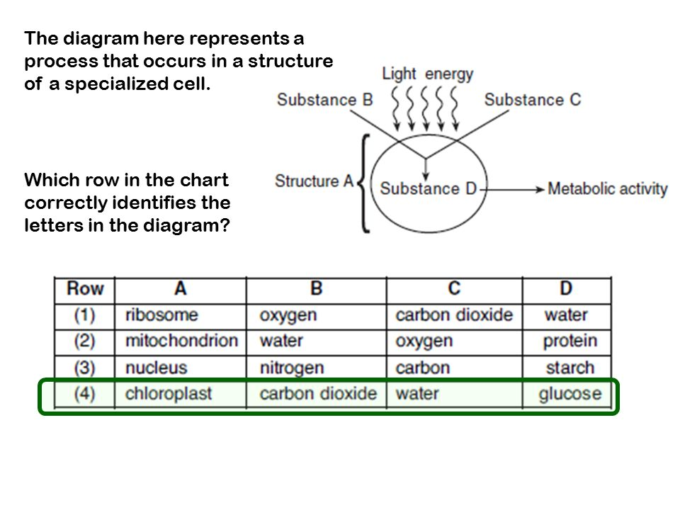 the diagram here represents a