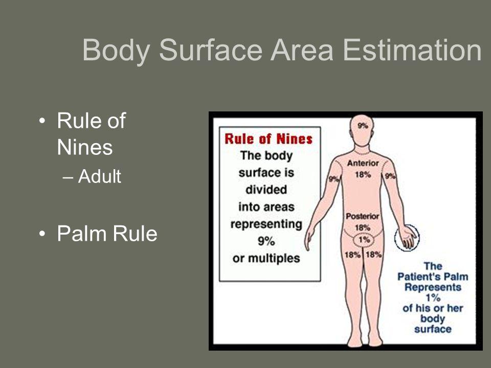 Luxury Rule Of Nines For Body Areas Anatomy Embellishment - Anatomy ...