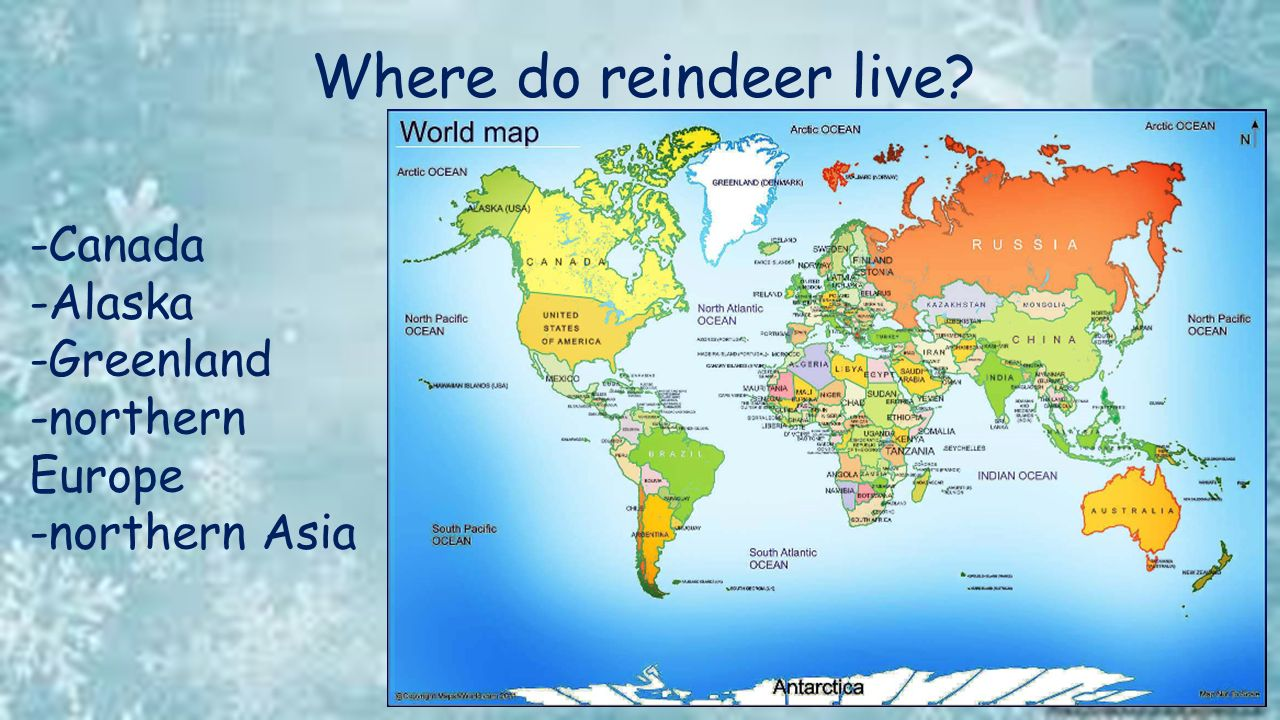 Reindeer Created by L  Ford  - ppt video online download