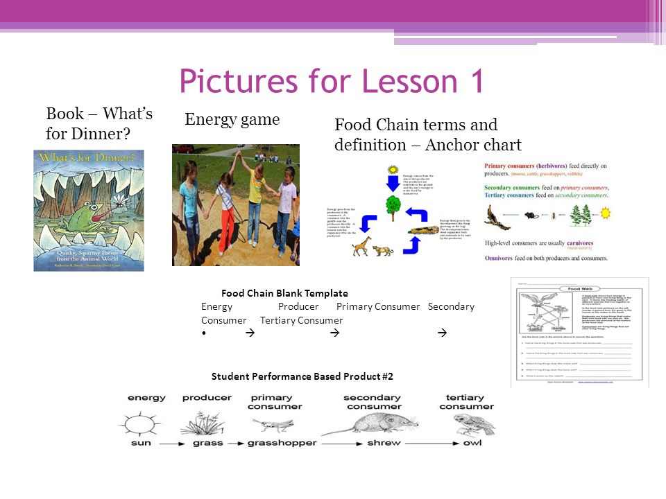 Grade 4 food chain and food web ppt video online download 6 pictures maxwellsz