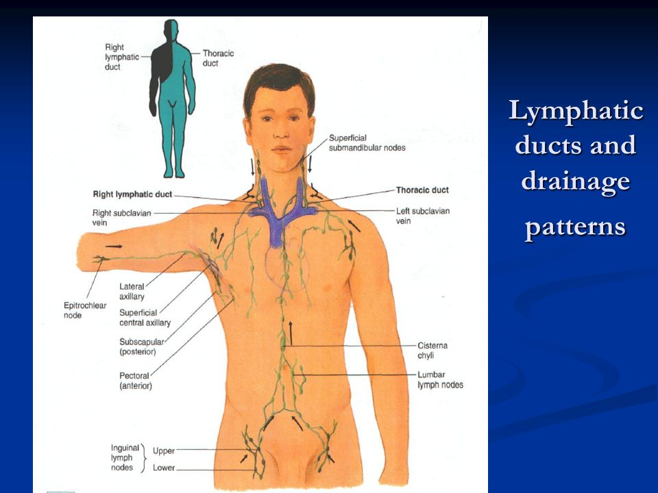 Peripheral Vascular System And Lymphatic System Ppt Video Online
