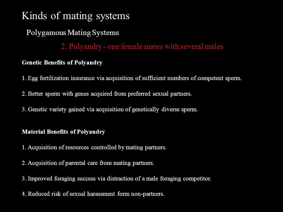 benefits of polygamy