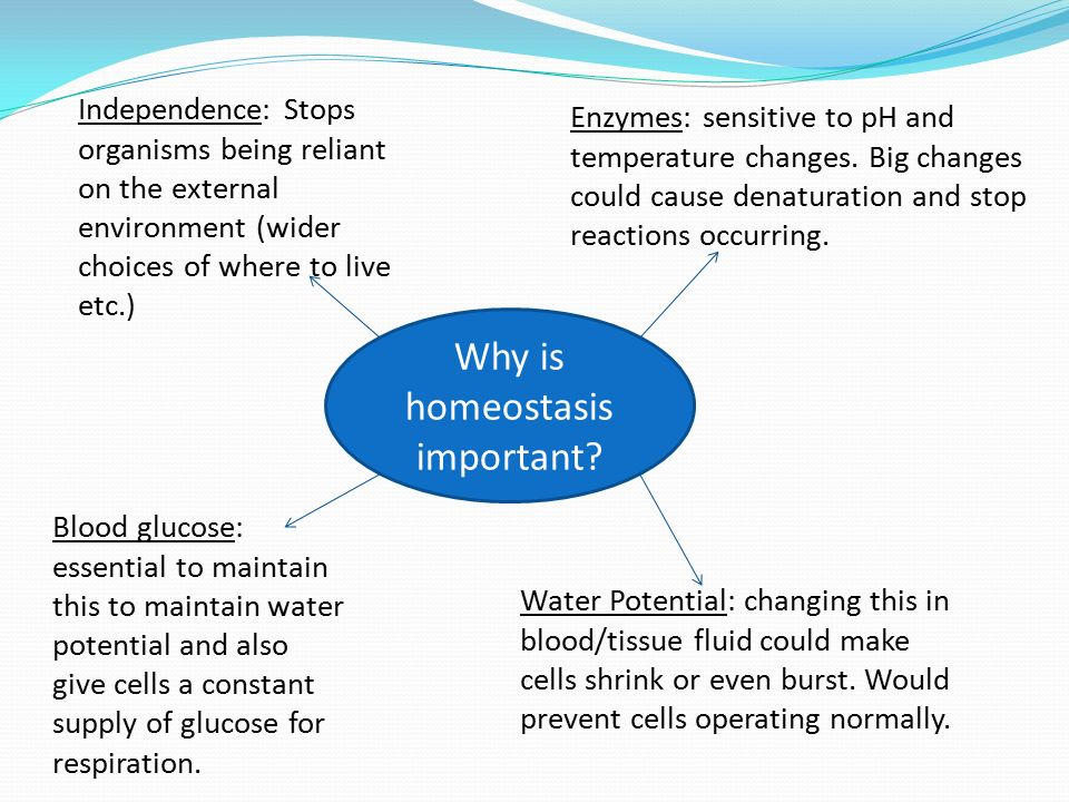 why is homeostasis important