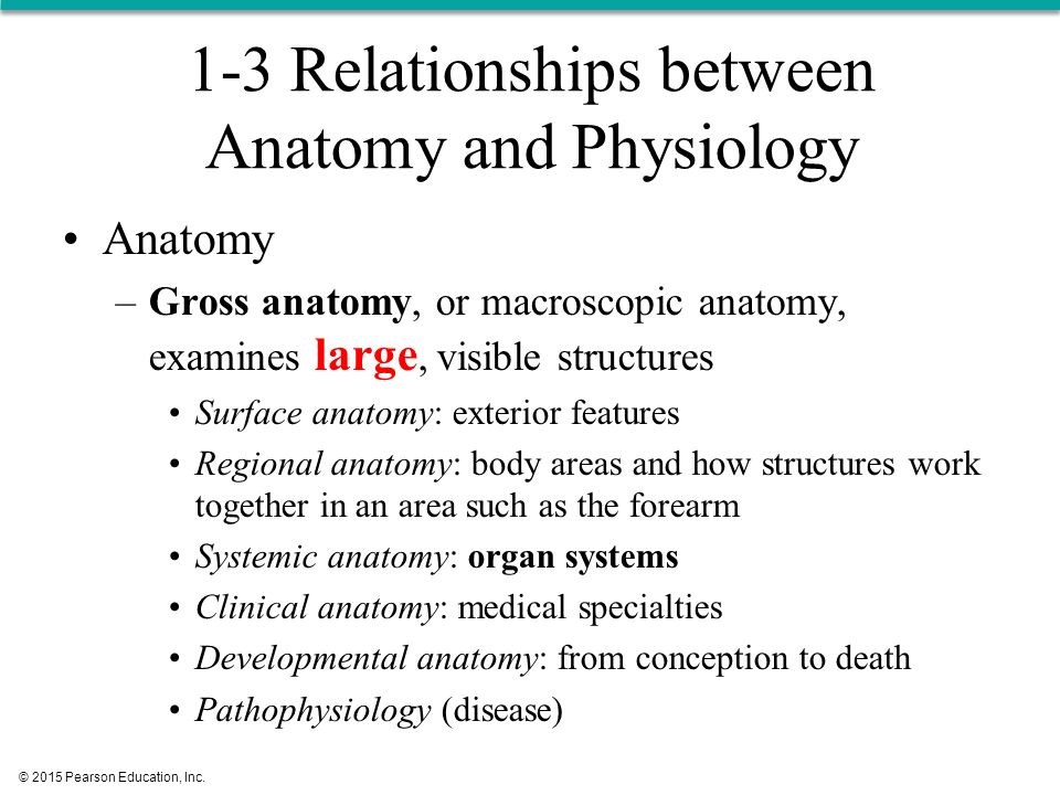 Chapter 1 Anatomy & Physiology 1 - ppt download