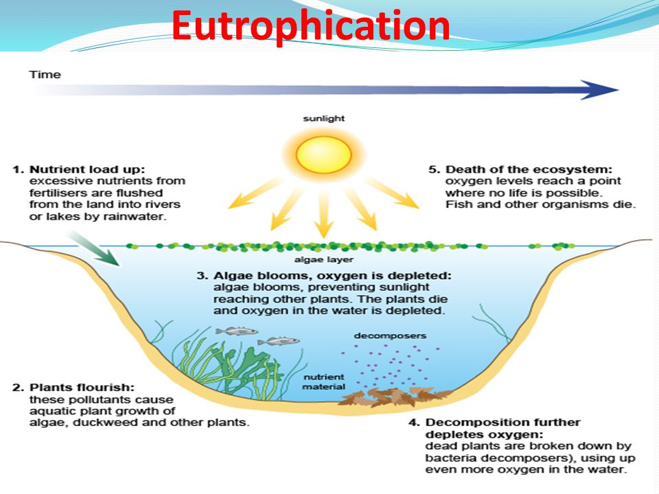 Hydrosphere Earth S Water By Carla Thompson Ppt Download