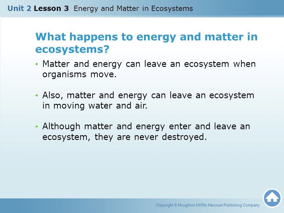 How Does Energy Stored In Food Enter The Ecosystem