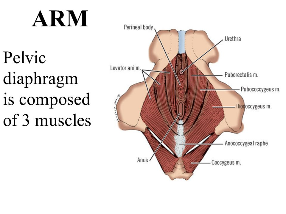 Anal Rectal Malformations Arms Ppt Video Online Download