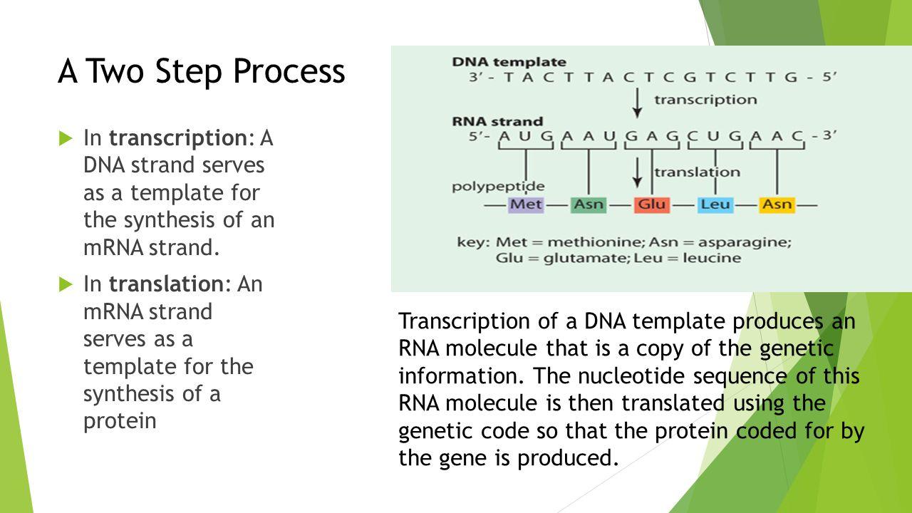 Lesson 3 – Gene Expression - ppt video online download