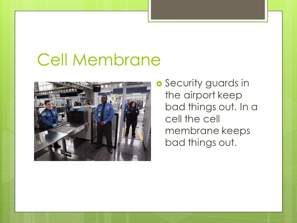 Cell Analogies Airport Ppt Video Online Download
