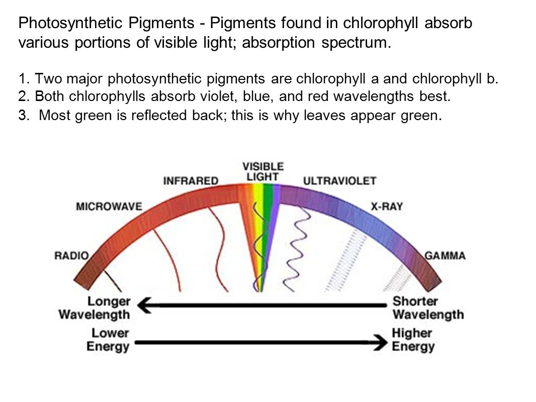 Chapter 7 Photosynthesis - ppt video online download