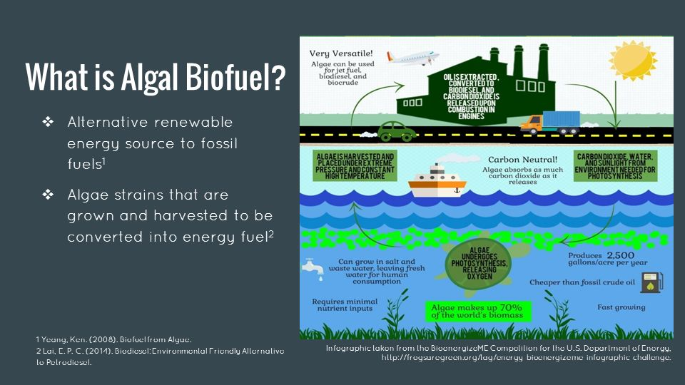 biofuels a preferred energy source essay Free essays research biofuel and ethanol energy essay thus, the demand for the alternative energy sources has increased these possess several advantages, namely, renewability, environmental sustainability, cost-effectiveness, and approved manufacturing technologies.