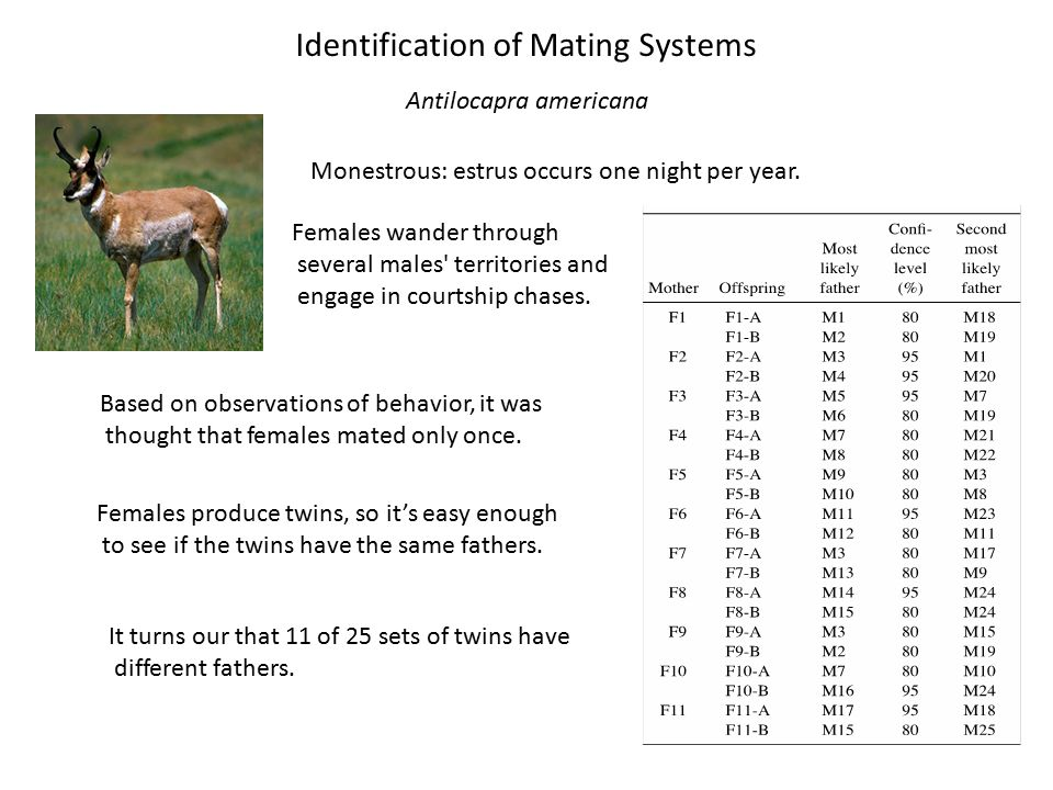 Mammalian Population Genetics - ppt video online download