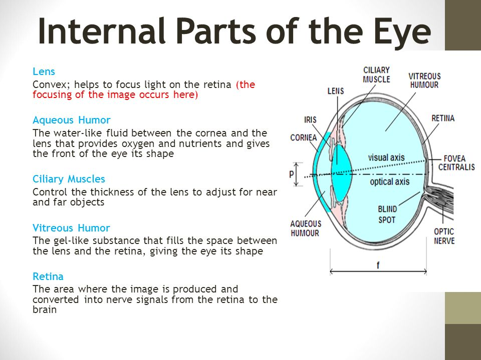 Section 121 Part 1 The Human Eye Ppt Download