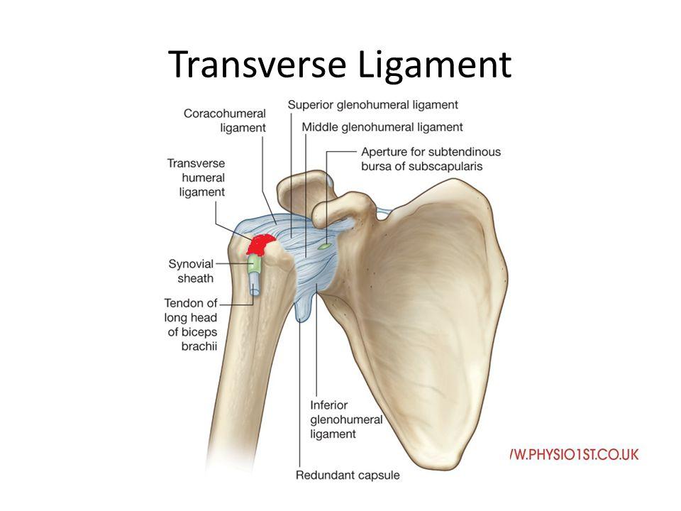 Anatomy, Joint Orientation and Arthrokinematics - ppt video online ...