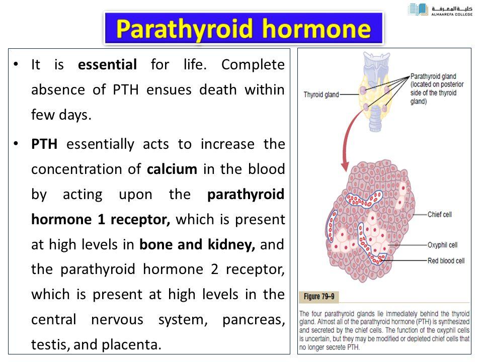 Parathyroid Glands Ppt Download