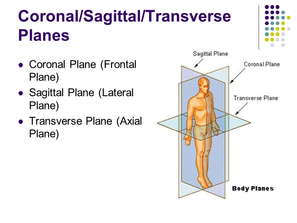 Body Regions & Anatomical Terminology - ppt video online download