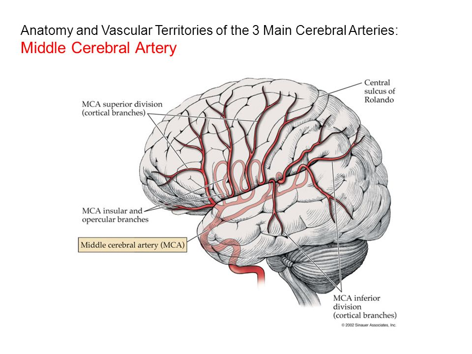 Anatomy for Neuroimaging - ppt video online download