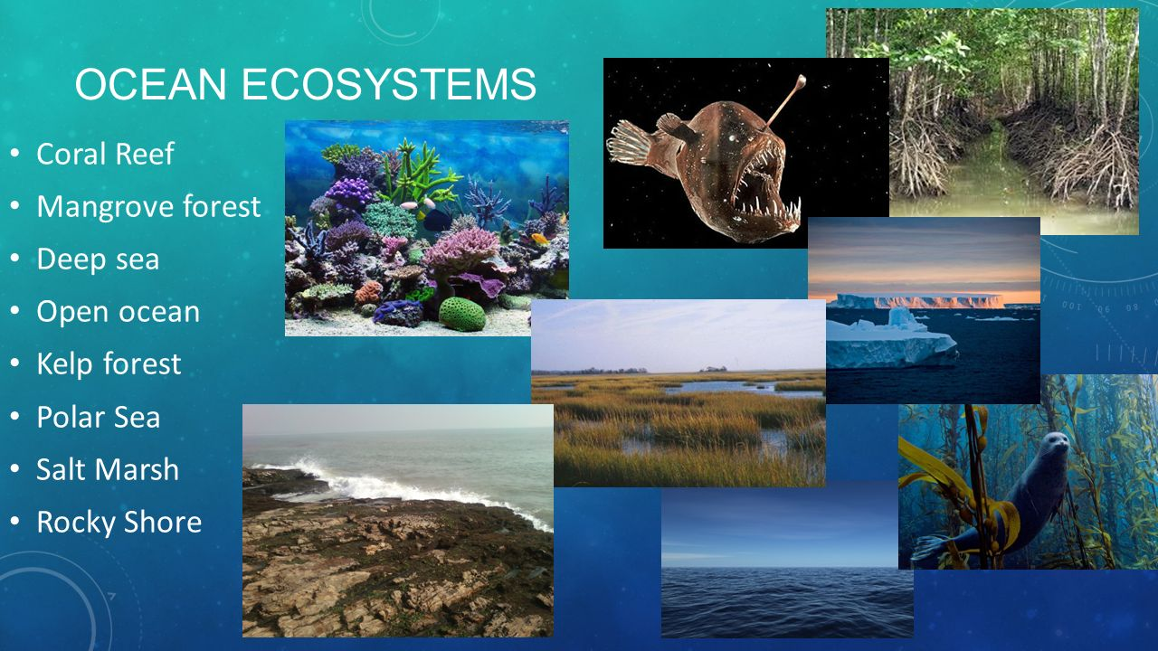 analyze the rocky shore ecosystem essay Rocky mountains lesson plans and worksheets from  rocky mountains teacher resources  students explore and classify organisms found in a rocky mountain ecosystem.
