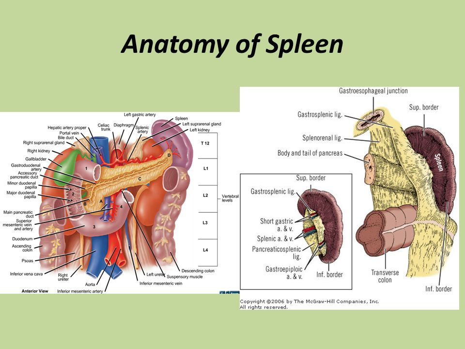 Diseases of Spleen M K Alam. - ppt video online download