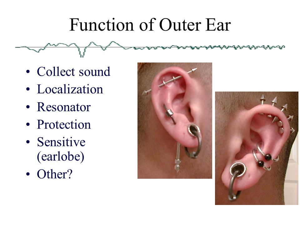 Anatomy of the Ear Dr isazadehfar. - ppt download
