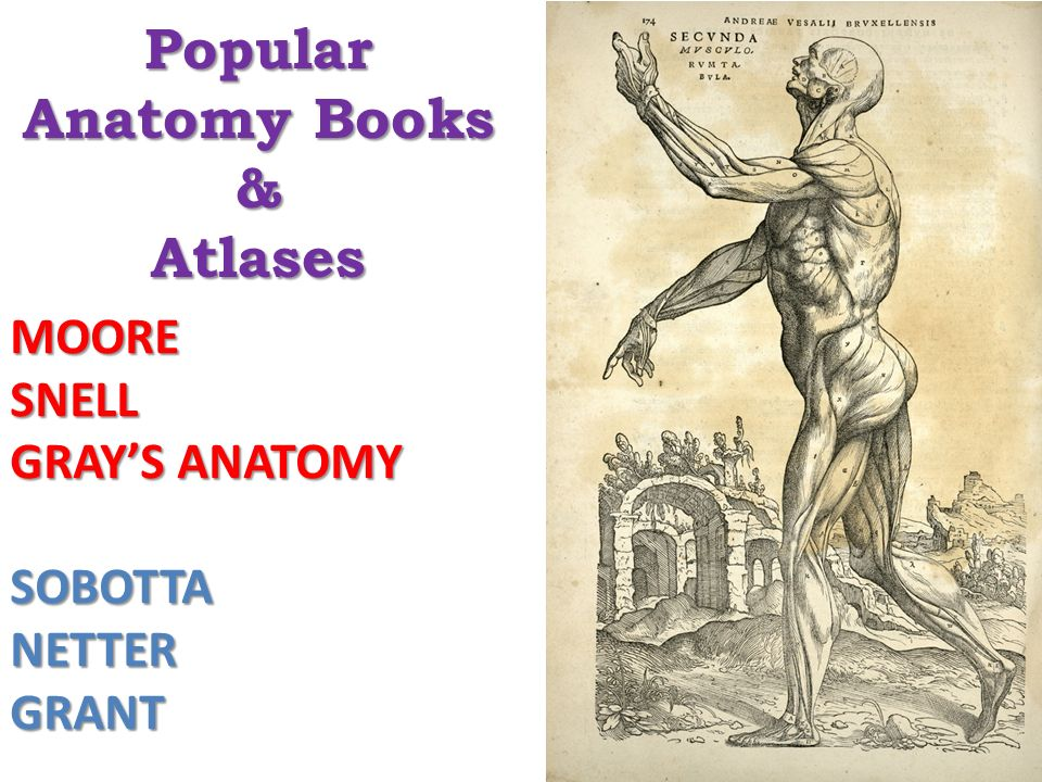 Introduction To Anatomy Ppt Video Online Download
