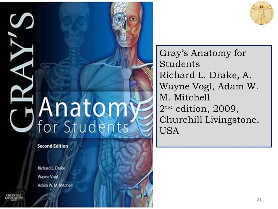 Grays Anatomy For Students Images - human body anatomy