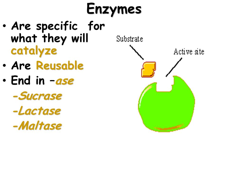 Enzymes Are specific for what they will catalyze Are Reusable