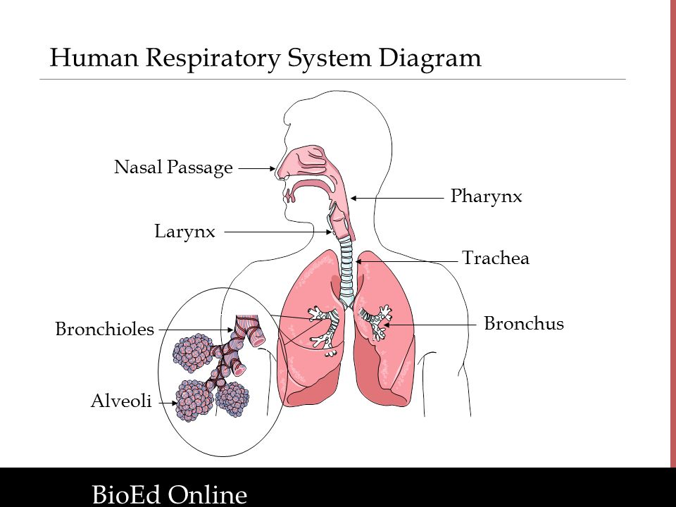 The Human Organism Introduction To Human Body Systems Ppt Download