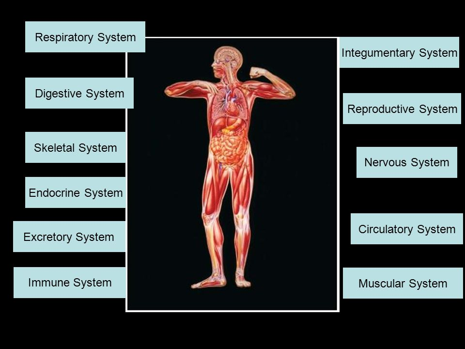 The Human Body Interactive Powerpoint Ppt Video Online Download