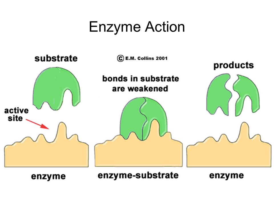 enzyme substrate complex - 960×720