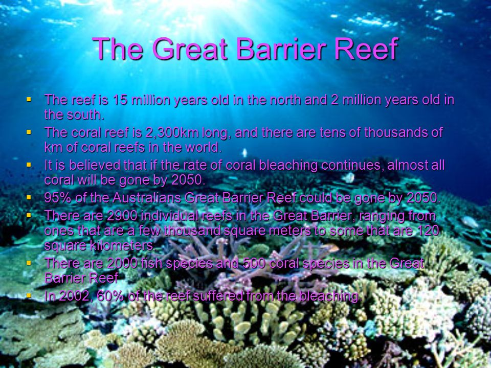 Ppt – corals and coral reefs powerpoint presentation | free to.